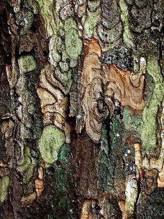 妙本寺:鎌倉 Myohon-ji, Kamakura - Soft Autumn Prints, Patterns & Textures - Lichen and tree bark. I don& know why but every time I look at it I thinks its The Predator! Natural Forms, Natural Texture, Green Texture, Rug Texture, Texture Design, Wood Texture, Patterns In Nature, Textures Patterns, Nature Pattern