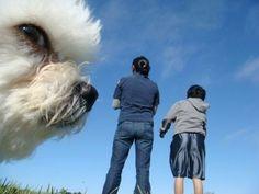 Alvorligt, at sky ligner din hund