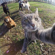 Manny, es un gato, al que le encanta hacerse selfies, como puedes comprobar en estas fotografías, o por lo menos, jugar mucho con la GoPro. Según su...