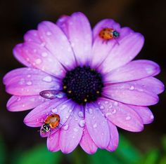 I have always loved lady bugs. Them and fireflies for as long as I can remember.
