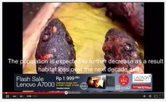 The EXTREME meat MARKET in the world