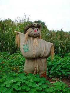 love this scarecrow