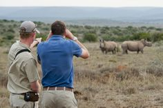 Kwandwe is a world-class Big Five safari game reserve in South Africa, close to Port Elizabeth. Port Elizabeth South Africa, Rhino Africa, Safari Game, South Africa Safari, Private Games, Out Of Africa, Game Reserve, African Safari, Walking In Nature