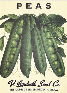 Heirloom Vegetable Seed Packet Note Cards | Beekman 1802