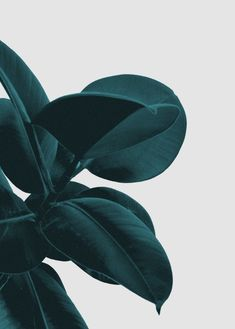 Long way home Art Print, urban jungle trend, botanic trend, plant trend, modern wall art, contemporary art print, tropical art