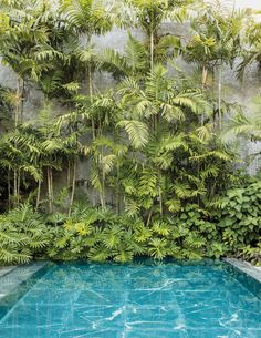 Now, an Artist Is Rethinking One of His Ho… Oscar Niemeyer Defined Modern Brazil. Now, an Artist Is Rethinking One of His Houses. – The New York Times Backyard Pool Landscaping, Tropical Landscaping, Modern Landscaping, Landscaping Ideas, Tropical Backyard, Bali Garden, Terrace Garden, Balinese Garden, Garden Paths