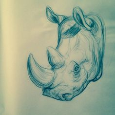 rhinooope #art #sketch #rhino #drawing
