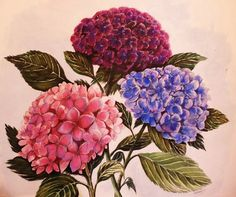 Hydrangeas in Watercolors and Soft Pastels for Auntie Rosanna (2012)