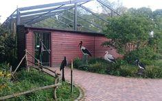 Naturzoo Rheine Stork Aviary