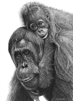 Baby On Board - Animal Pencil Drawing #25 >> See All 42 Incredibly Realistic And Adorable Pencil Illustrations Of Animals