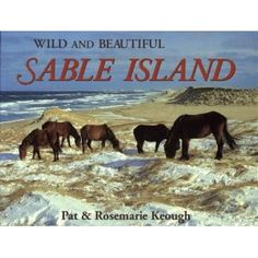 Wild and Beautiful Sable Island: Sand, Seals, Wild Horses, and Shipwrecks