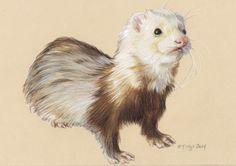 Colored pencil ferret sketch.