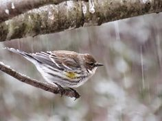 The Joy of Bird Watching and Living a Simple Life: Snow Georgia Style