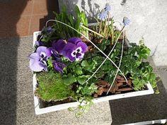 Vårplantering Blomsterhörnan: mars 2010