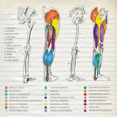 Legs in Dr.Seuss colours - By Prisillalives