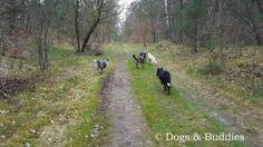 Hundeblog dogsundbuddies.com - Blog - Hundeblogger - Dogblog - Dogblogger - Niedersachsen - Oldenburg - Oldenburger Hunde - Bundeswehrgelände Bümmerstede - Bümmerstede - Truppenübungsplatz