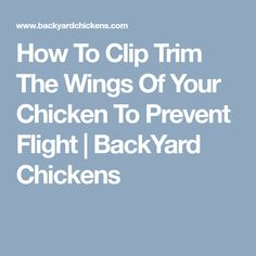 How To Clip Trim The Wings Of Your Chicken To Prevent Flight   BackYard Chickens