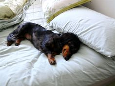 Yes - you get out of bed, and I'll just take your spot.  Wake me when it's breakfast time.