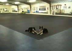 Doggy Daycare Flooring - Rubber Flooring
