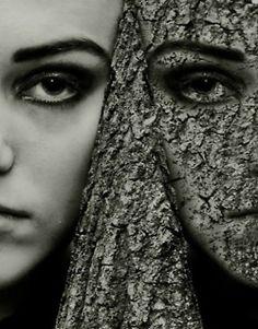 The Premonition Series-hide