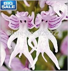 Afbeeldingsresultaat voor orchideeén