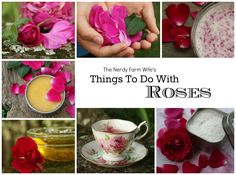 I have an abundance of roses blooming around my house and am always experimenting with ways to use them.  In fact, I created a whole eBook containing 36 of my favorite rose recipes and projects! (Click HERE to check it out!)  The petals are lovely sprinkled in salads, wonderful for making soap, ...