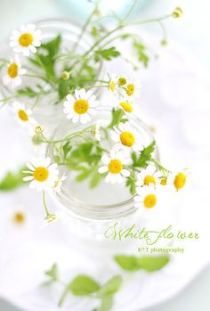 daisies. simple & pure.