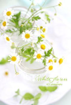 Decoração com flores do campo em jarras de vidro.