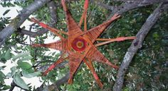 AugenWeide - Startseite Mehr Willow Weaving, Basket Weaving, Basket Willow, Dream Catcher Mobile, Paper Weaving, Handmade Ornaments, Garden Art, Container Gardening, Decoration