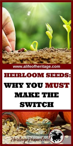 Heirloom seeds are the key to our future. 9 reasons you should plant heirloom and the truth about how much they really cost. Recommendations where to buy. Heirloom seeds | Spring planting | Garden | Gardening | Seeds |  via @delciplouffe