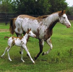 My perfect horsey family