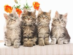 What is your favorite cat breed and how can one create the perfect habitat for a cat? - Experts Roundup