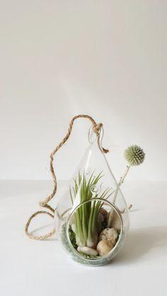 Glass Terrarium Teardrop Hanging Planter by PlantandColor on Etsy, $16.00