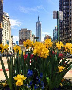 Spring in New York. Flatiron District.