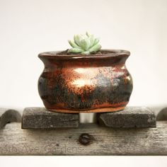 succulent in rustic pottery  { https://www.facebook.com/pages/4th-Ave-Gardens/475906652488415 }