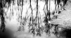 Amalgamation by Matti Ollikainen on 500px