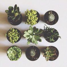 artificial plants aloe vera plants pot plants home decor lifestyle