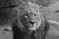 lions 3 von Deschain
