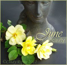 Planter in my garden - ©Cindy Rippe - 2012 The flower for the month of June is the Rose. Love and Beauty are the most common meaning. June Birth Flower, June Flower, Birth Month Flowers, Flowers For Each Month, Dating Meaning, Month Signs, Language Of Flowers, June Birth Stone, Flowering Trees