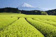Green Tea health benefits explained