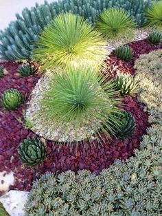 I like how they used colored rocks to add dimension to the plants and landscape Desert garden.not that I need a desert garden but this same idea with succulents would work great on my backyard hill! Succulent Landscaping, Succulent Gardening, Cacti And Succulents, Planting Succulents, Backyard Landscaping, Landscaping Ideas, Arizona Landscaping, Organic Gardening, Succulent Rock Garden
