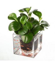 Self-Watering Flower Pot Fish Tank
