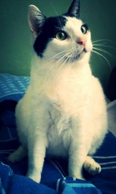 Majestic cat