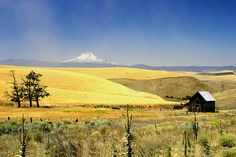 Beyond The Yellow Fields, Eastern Oregon