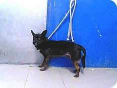 URG'T ~~ Los Angeles County Lancaster   Pet ID #:A4429533  Phone:  (661) 940-4191     E-mail:  Please call this shelter!  (They don't list their email address here)  Website:  http://animalcare.lacounty.gov  Address:5210 W. Ave. I  Lancaster, CA   93536