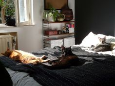 Lazy weekend | Flickr - Fotosharing! Statt Nachkästchen bei kleinem Schlafzimmer