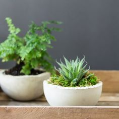 Learn how to easily create concrete mini planters with Makers Mix concrete compound and their handy molds. Mix Concrete, Concrete Planters, Garden Planters, Planter Pots, Modern Planters, Concrete Garden, White Concrete, Diy Planters, Balcony Garden