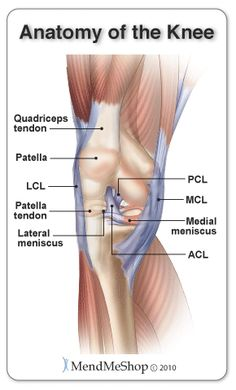 The lateral (outside of the knee) and medial (inside of the knee) menisci, patella, PCL, ACL, MCL, LCL and quadriceps tendon.