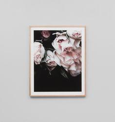 Rose Noir | Framed Print | The Block Shop