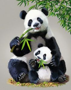 Photo from album Татьяна Доронина on View album on Yandex. Wild Animals Pictures, Animal Pictures, Baby Elephant Images, Image Panda, Baby Panda Bears, Baby Pandas, Red Pandas, Panda Painting, Panda Illustration